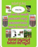 Fodder Seeds For Sale In Chicholi Karnataka