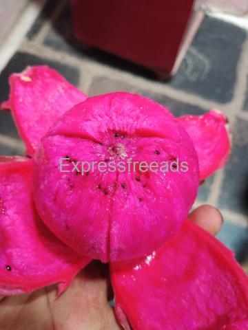 Hybrid Pink Dragon Fruit For Sale In Kadapa District Andra Pradesh