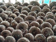 Suvarna Gadde, Elephant Yam, Kandha Gadda for Sale in Hosanagara Karnataka