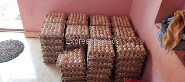 Nati Chicken Eggs For Sale