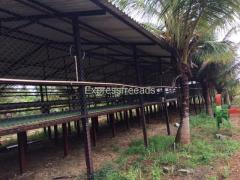 modern technology  Sheep goat shed for sale