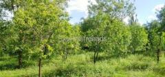 Farm land For Sale Close to Hiriyur road