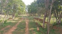 25 Acers Farmland For Sale Tamilnadu
