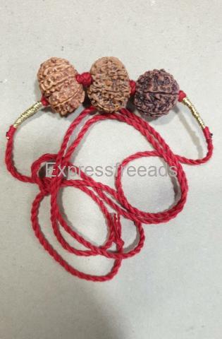 Rudraksha 12 Mukhi 6 Mukhi and 8 Mukhi Combination for Buissness