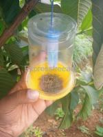 FRUIT FLY TRAP(IPM Trap)