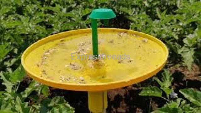 BRINJAL FRUIT & SHOOT BORRER WITH WATER TRAP