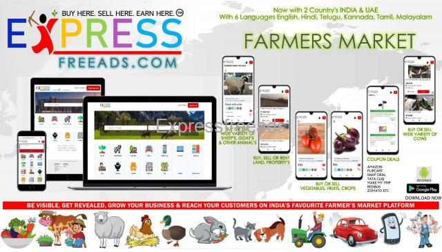Expressfreeads.com Classified Website in India