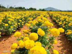 All Type Of Flowers Fruits and Vegetable Plants Are Available For Sale In Rajahmundry