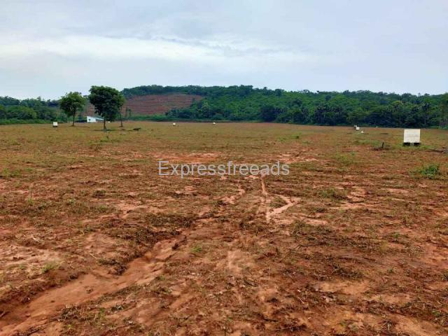 16 Acers Agriculture Land For Sale In East Godavari District Andhra Pradesh