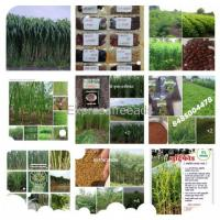 All types of fodder seeds home delivery available
