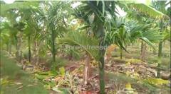 4 acre 10 guntas Agriculture land For Sale Tumkur district Karnataka