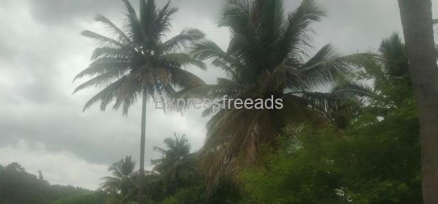 6 Acers Agriculture Land For Sale In mangalore Bangalore Highway