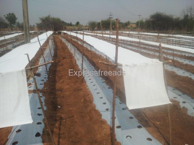 Used shade net For sale In Molakalmuru Chitradurga District Karnataka