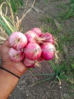 two acres of onion For Sale In Bagalkot District Karnataka