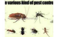 Sri balaji Pest control tirupati andhra pradesh