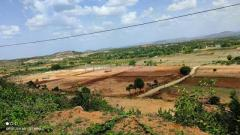8.5 Acers Agriculture Land Sale in Near Chandragiri Andhra Pradesh