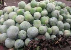 ash gourd For Sale In Davangere karnataka