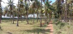3.13 Acres Coconut Plantation Agriculture Land For Sale In Hiriyur