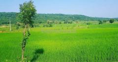 5 to 8 Acres of Agriculture land for sale In Hyderabad