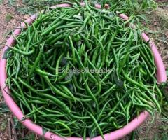 Badige Green Chillies For Sale In Bangalore