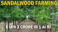 Prakruthi urban framland plots for sale near by ramoji filimcity.