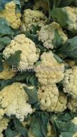 A Grade Gobi Flower For Sale In Chhattisgarh