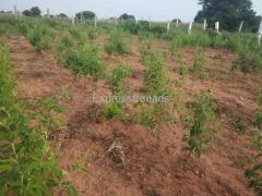 20 Guntas only Agriculture Land for Sale nearby Hyderabad