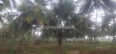 4 Acres Agriculture Land For Sale In Gubbi Karnataka