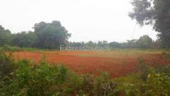 4 acres Agriculture Land for sale Kanakapura Road Bangalore