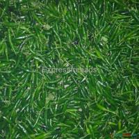 Kalash 1255 Bullett Green Chili