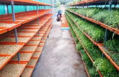 Fully automatic hydrophonics system with 500kgs fodder/ day for sale at Mysore