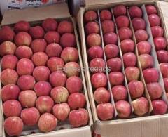 Himachal apples are available for sale #apples#apples for sale