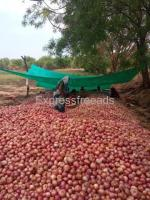 100 quintal onions for Sale Save Farmer Agriculture